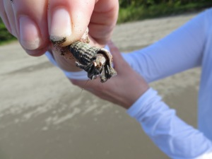 Ellen thought she found an empty shell for her collection - until the hermit crab popped out.
