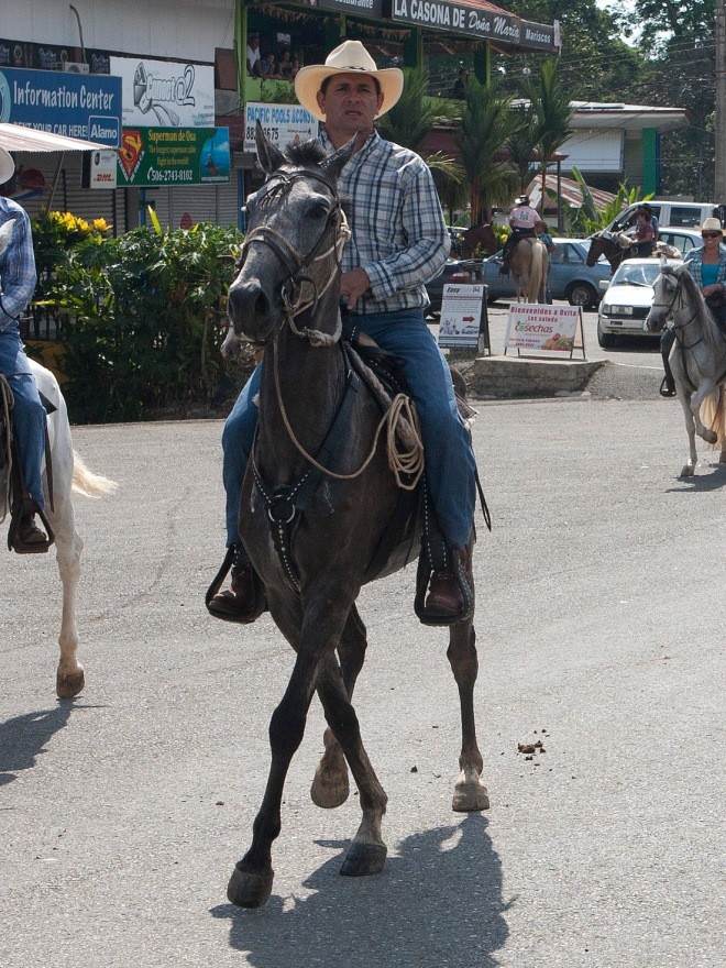 This horse was almost dancing down the street