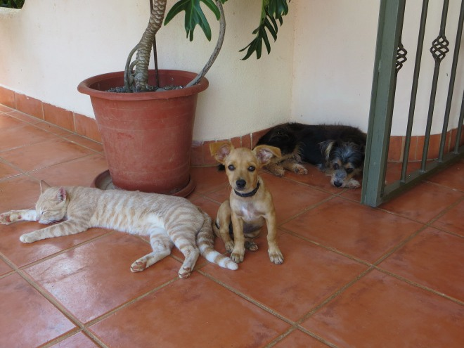 Pacho, the cat, Panina, the puppy and Lucas