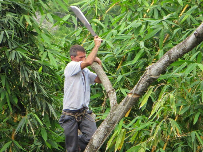 Chopping a limb with his machete