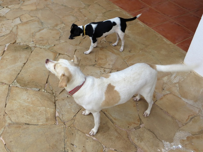 Paloma and Chiquita