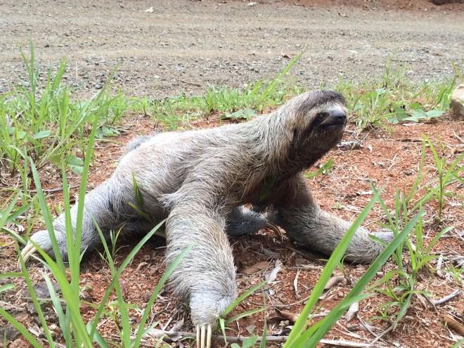 V - sloth