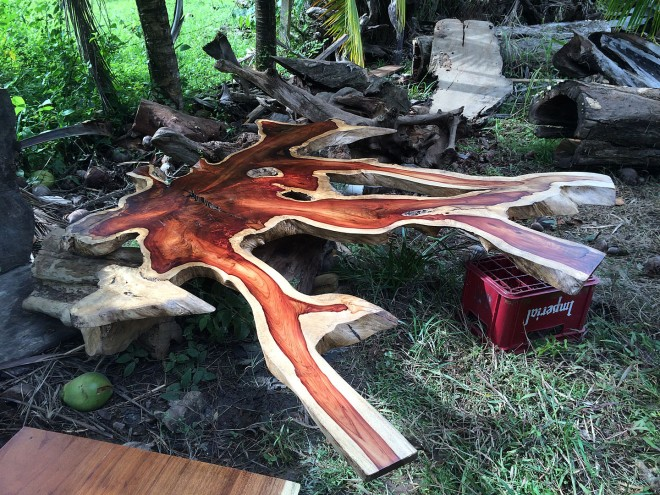 This is the cross section of the Cristobal tree which weighs about 200 lbs.